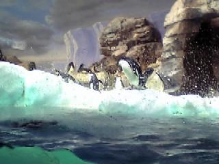 adery-penguin.JPG