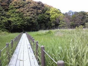 Okegayanuma_2015_04_26_2