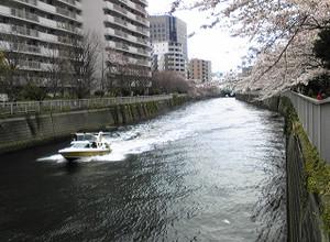 Megurogawa_sakura_20150329_3