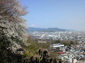 Sizuhatayama_sakura_20150330_1