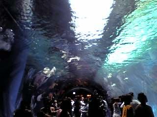 アクアスタジアム、海中トンネル