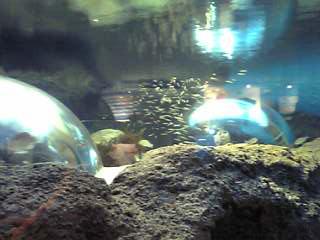 gobius-dome