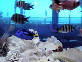 桂浜水族館、サンゴ礁水槽