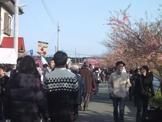 kawaduzakura2