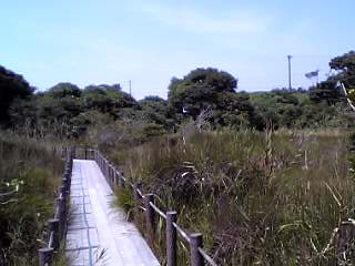 kurokawa-situgen