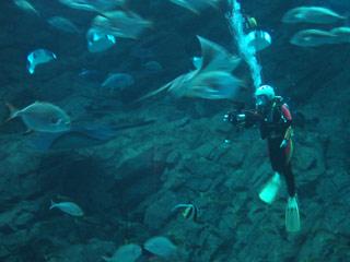 marinworld-diver