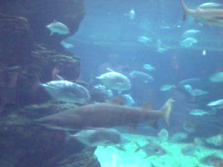 須磨、大水槽の魚