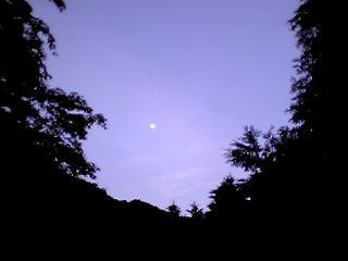 薄明終わり、月夜の森