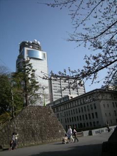 Sunpukouen_sakura080322_3