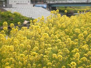 Asabata_20080323_1