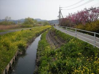 Asabata_20080323_3