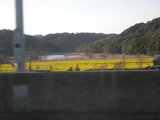 Okegaya_nanohana