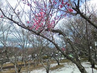 Nihondaira20140209_2