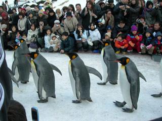 Asahiyama_penguin_sanpo_2