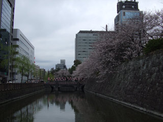 Horisakura20070331